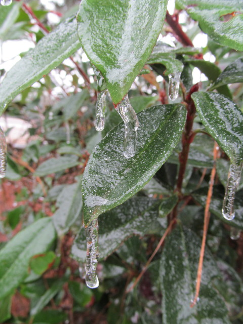 frozen bush 2