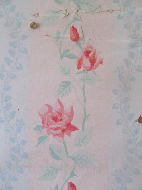 close-up of rose wallpaper