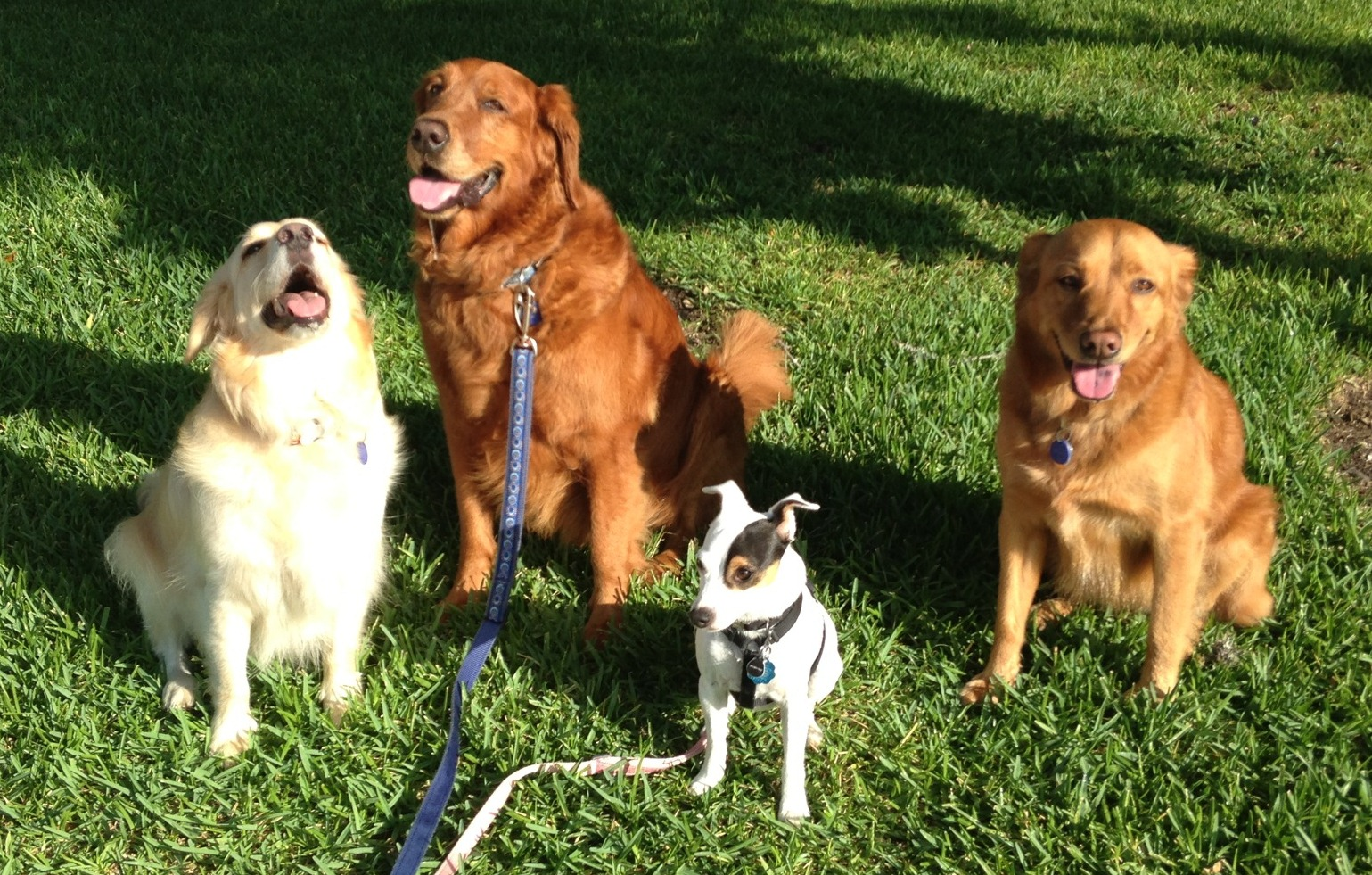 Kacy with 3 of Scott and Sheila's dogs