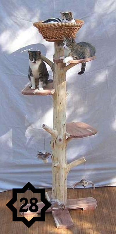 a tree for your cats