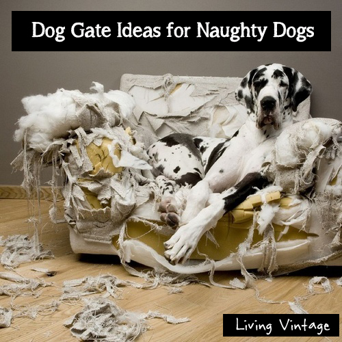 dog gate ideas for naughty dogs