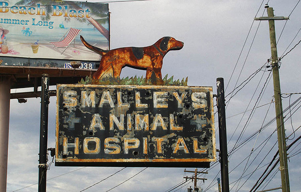Smalley's Animal Hospital - featured on Friday Favorites - Living Vintage