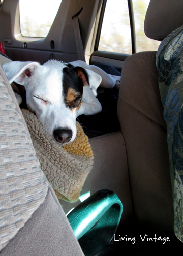 comfortably sleeping in the car
