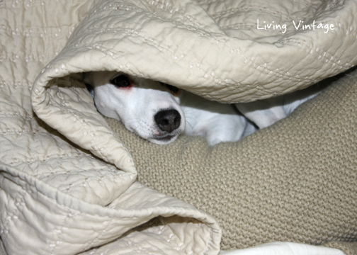 she burrows under the covers