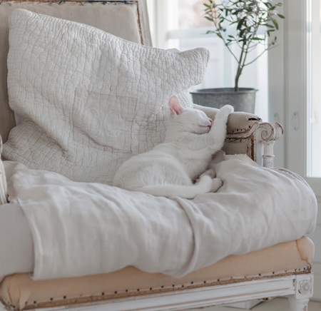 sleeping kitty - featured on Living Vintage's Friday Favorites. Come on over and see what else we picked!
