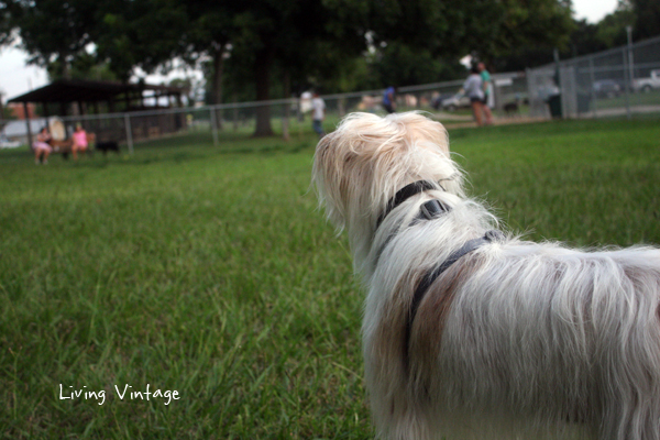 Our dogs at the dog park in Nacogdoches, TX