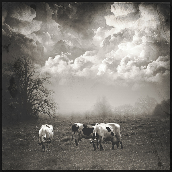a pastoral scene - one of 8 picks for this week's Friday Favorites - Living Vintage