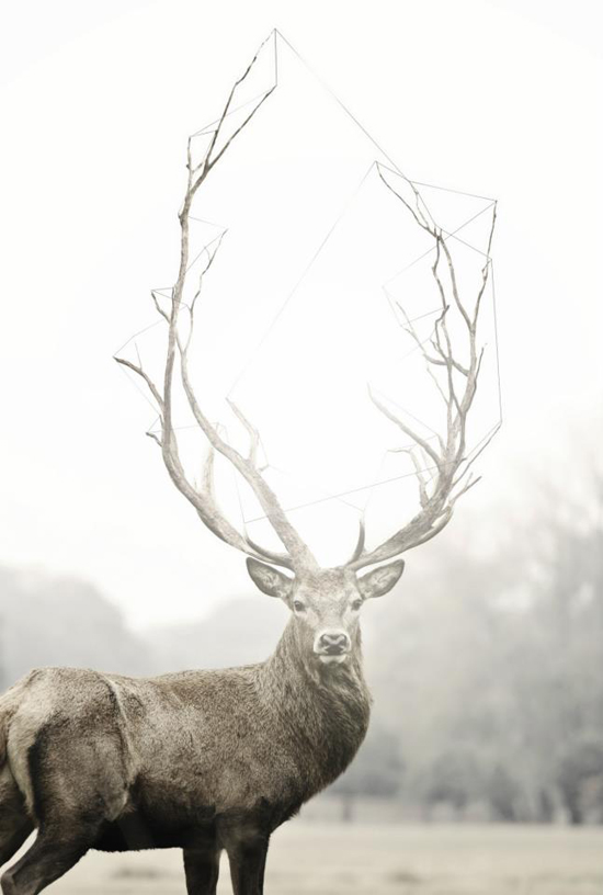a majestic buck - one of 8 picks for this week's Friday Favorites
