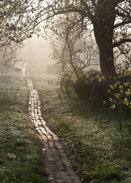 an orchard path at sunrise - one of 8 picks for this week's Friday Favorites