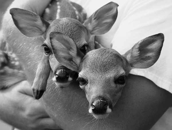 sweet twin deer - one of 8 picks for this week's Friday Favorites