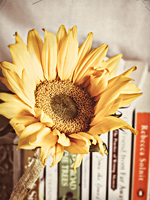 A lovely shot of a sunflower (one of my favorite flowers) - one of 8 picks for this week's Friday Favorites