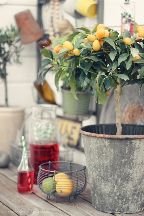 wishing for a lemon tree - one of 8 picks for this week's Friday Favorites