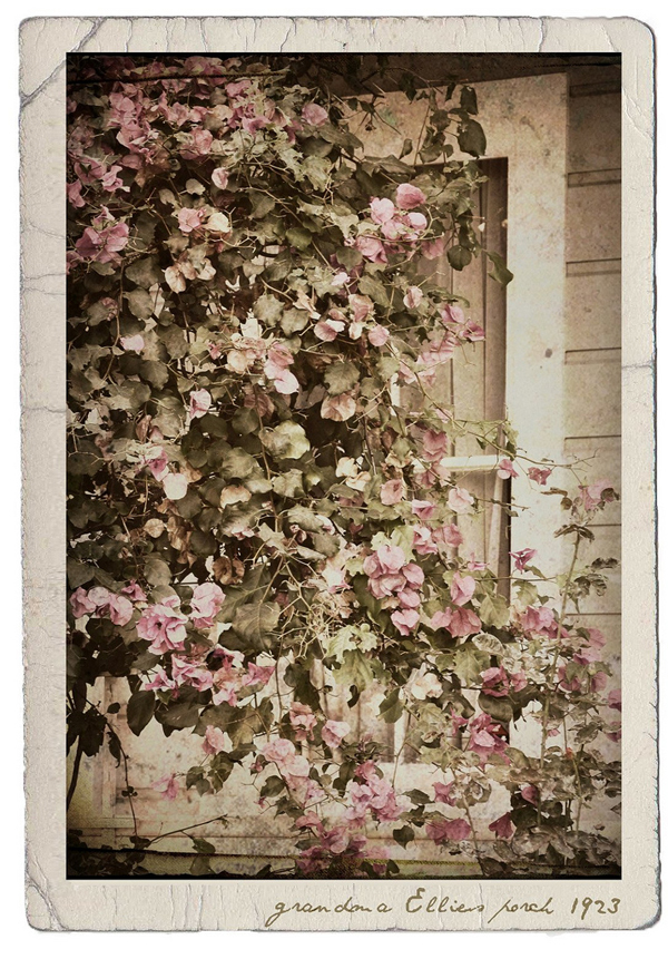 a beautiful image of the flowers decorating her grandma's porch - one of 8 picks for this week's Friday Favorites