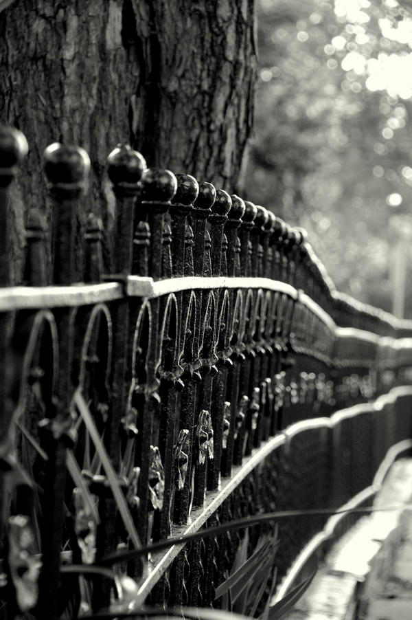 a gorgeous wrought iron fence -- one of 8 picks for this week's Friday Favorites