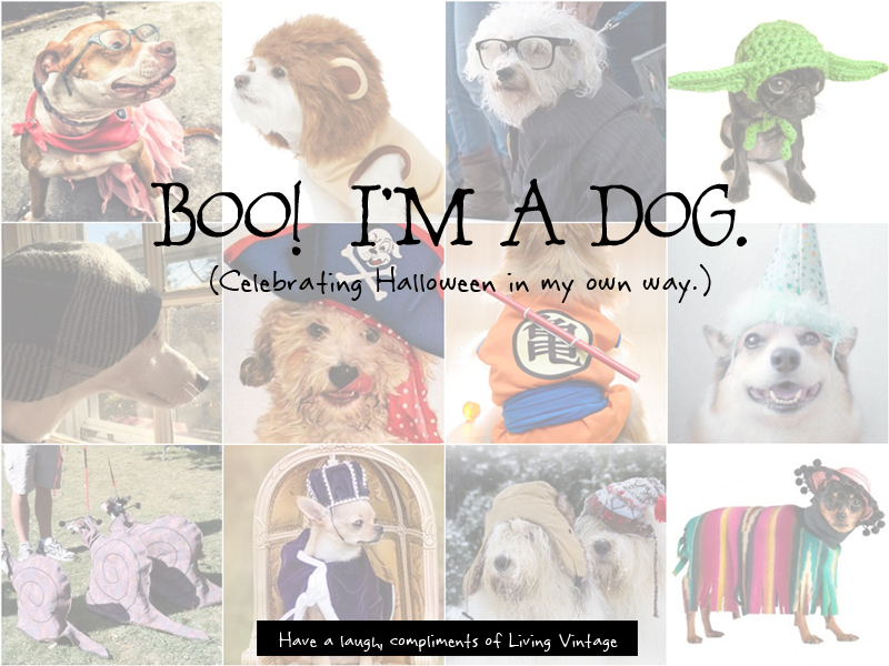 Boo. I'm a dog. (Celebrating Halloween by showcasing 12 hilarious dog costumes)