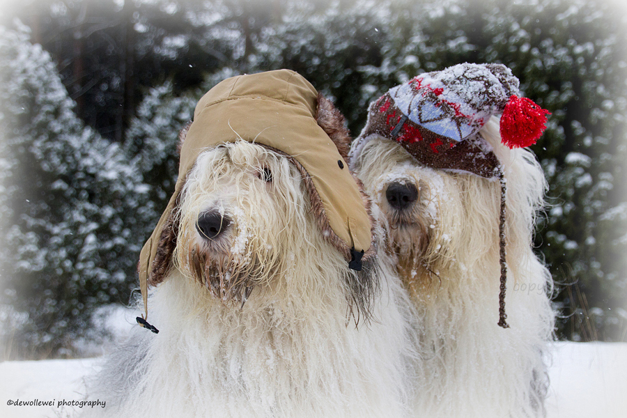 snow dogs - see more funny pet costumes at Living Vintage