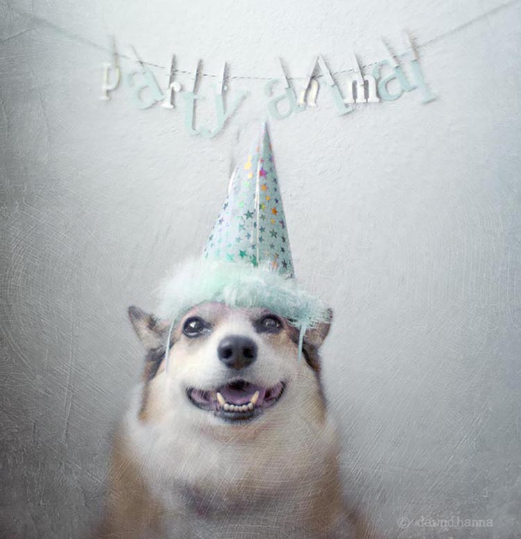 a delighted party animal - see more adorable dogs in costuems at Living Vintage