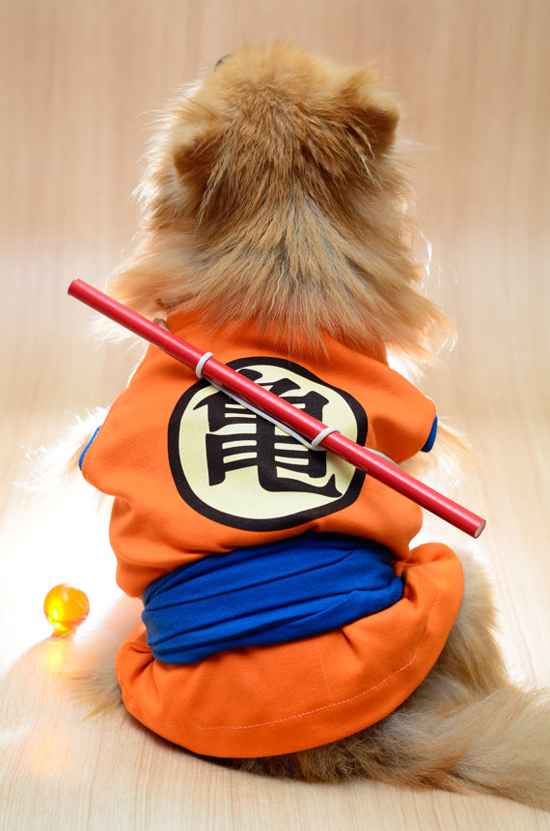 a martial arts aficionado - see more CUTE dogs in costumes at Living Vintage