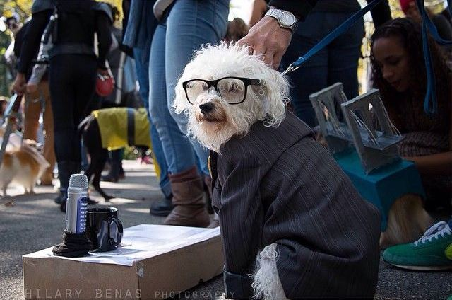 a professionally dressed dog - see more CUTE dogs in costumes at Living Vintage