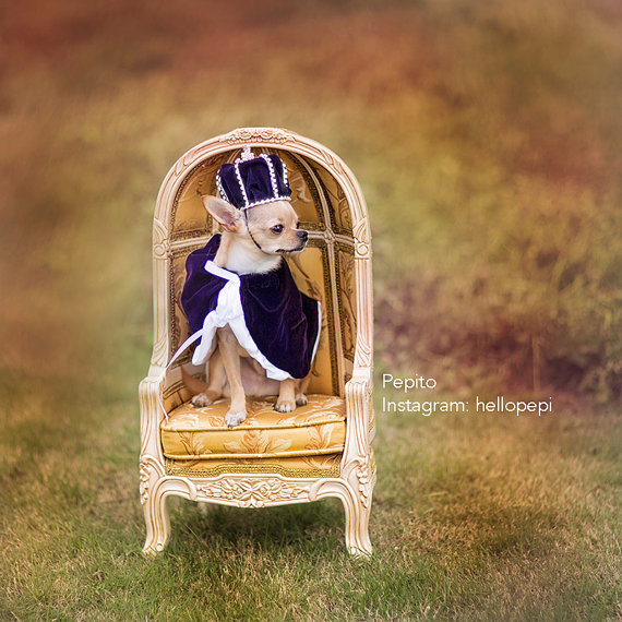 a royal dog -- see more cute dogs in costumes at Living Vintage