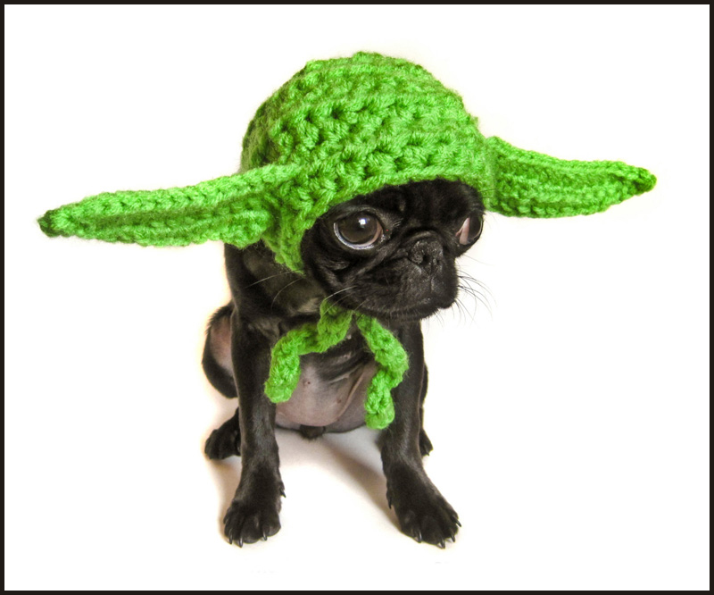 an adorable little Yoda - see more hilarious dogs in costumes at Living Vintage
