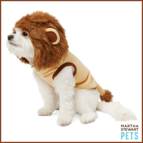 an itty bitty lion - see more CUTE dogs in costumes at Living Vintage