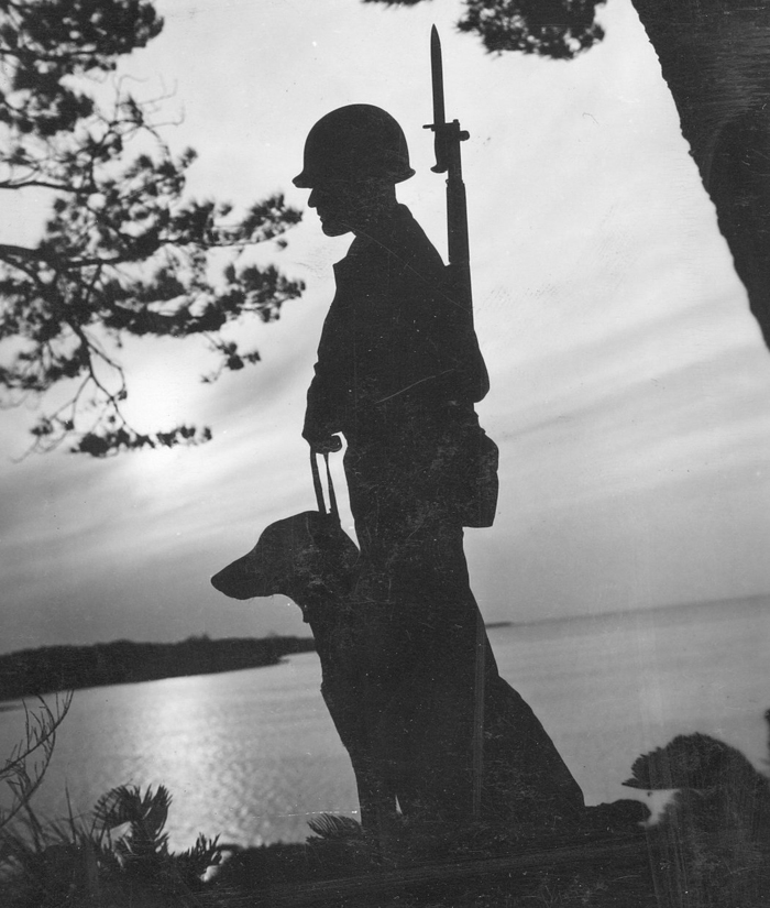 a gorgeous image of a WW2 soldier and his canine companion