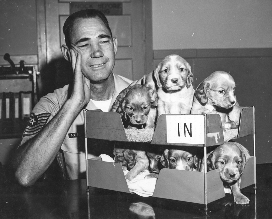 an in-box full of puppies during World War II