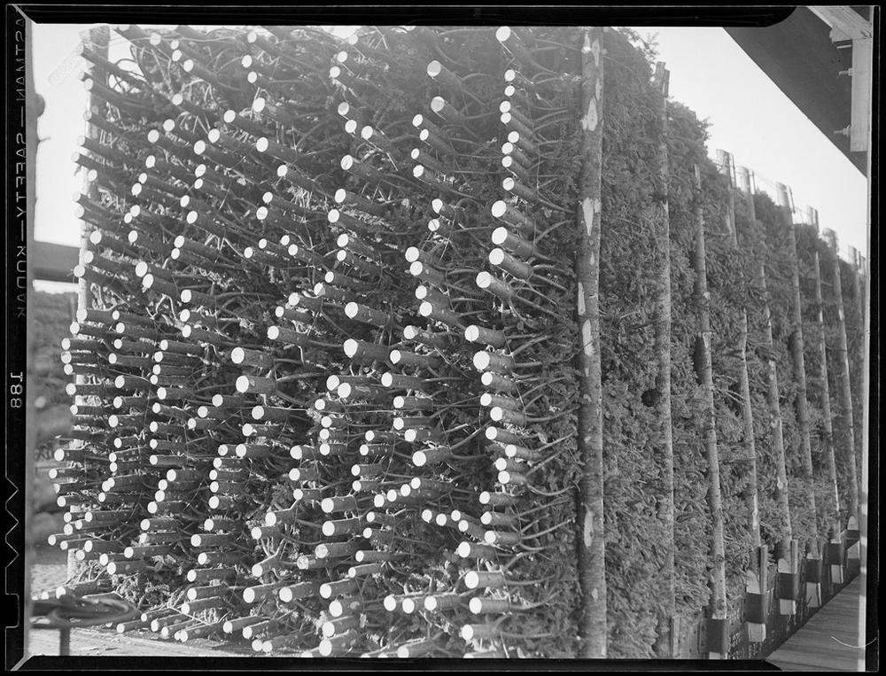 Christmas trees arriving by rail in 1940 - one of 8 picks for this week's Friday Favorites