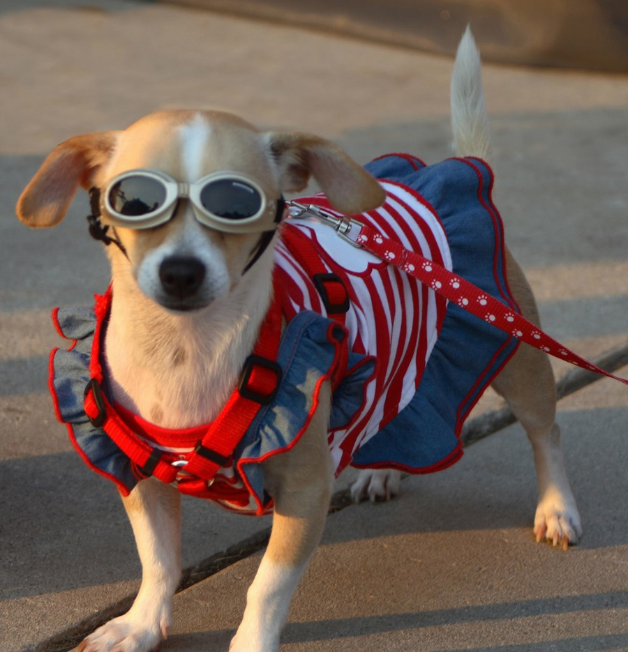 a patriotic pooch - one of 8 picks for this week's Friday Favorites