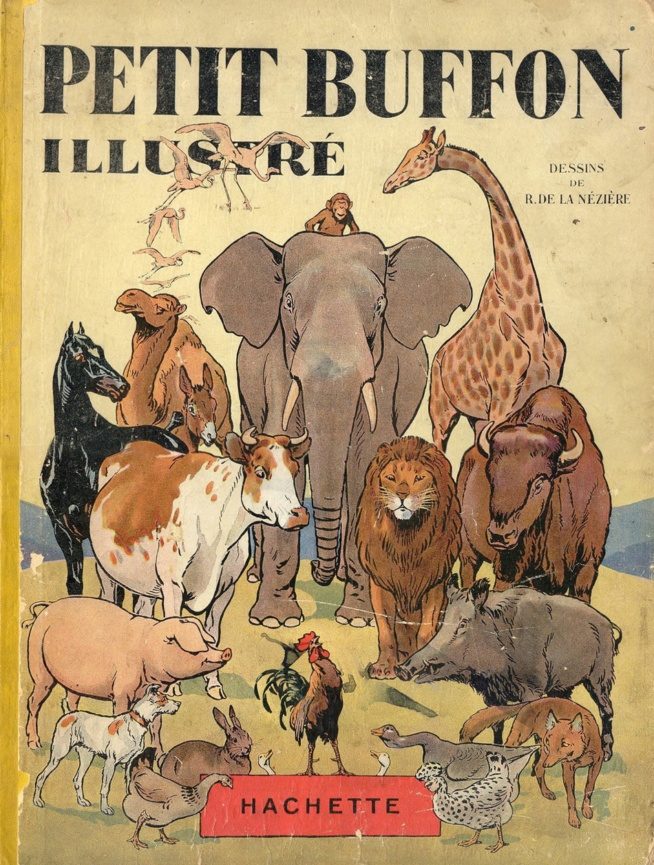 I have always been an animal lover and I fell in love with this wonderful book illustration - one of 8 picks for this week's Friday Favorites