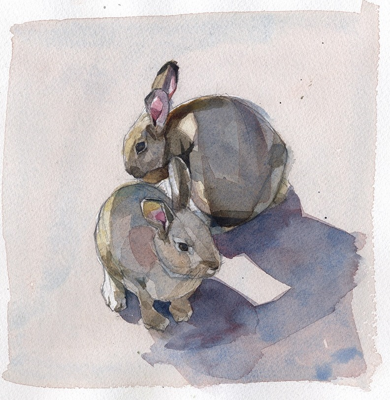 adorable bunnies - one of 8 picks for this week's Friday Favorites