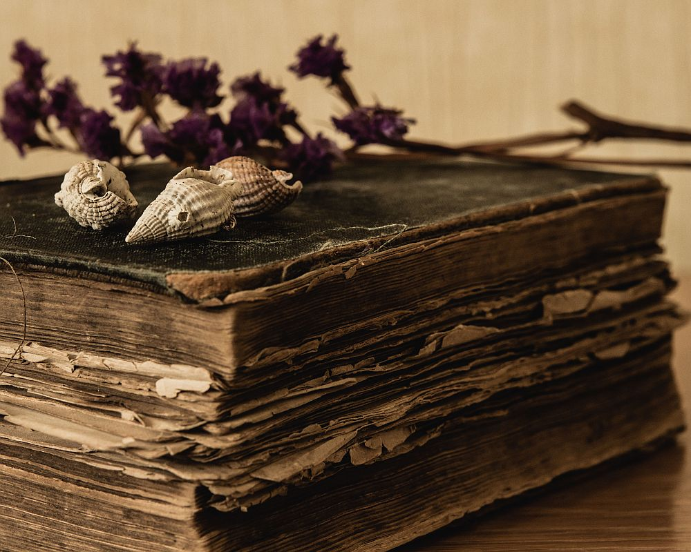 a gorgeous still life - one of 8 picks for this week's Friday Favorites