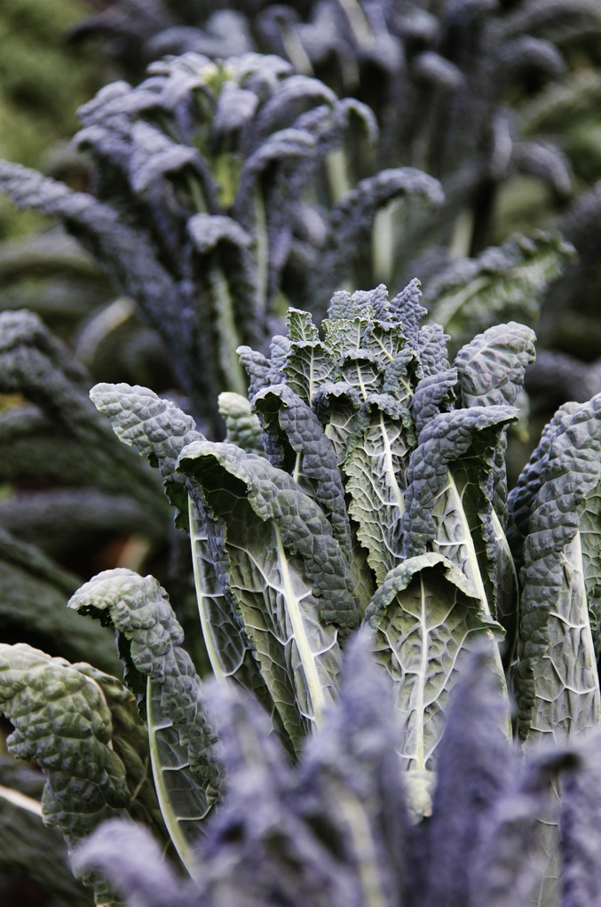 pretty purple hues in a vegetable garden - one of 8 picks for this week's Friday Favorites