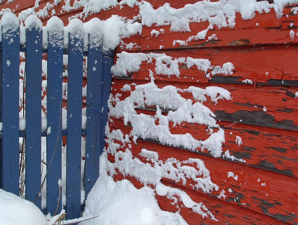 the colors of the flag in winter - one of 8 picks for this week's Friday Favorites