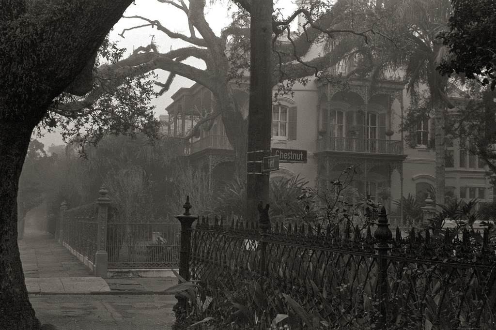 a foggy morning memory of New Orleans - 1 of 8 picks for this week's Friday Favorites