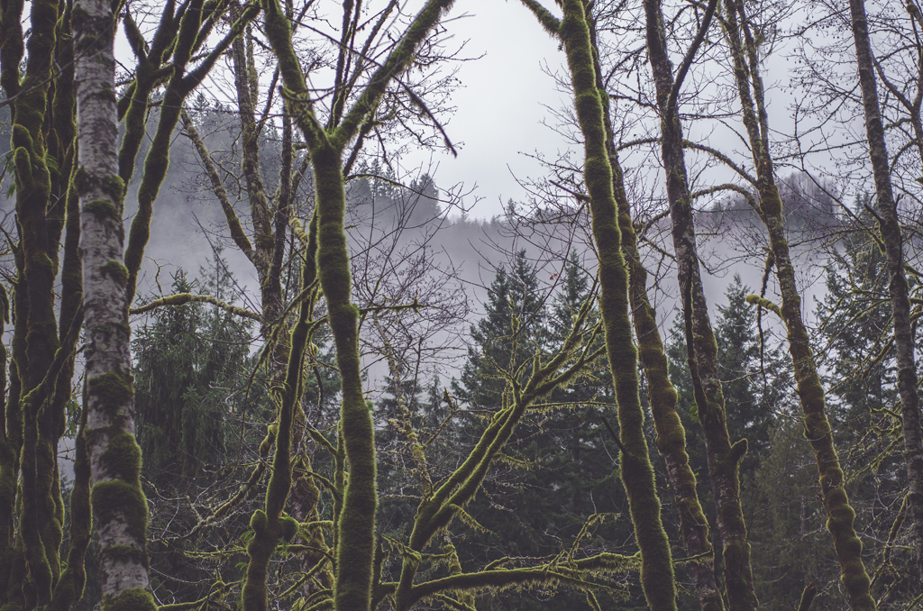 a purple fog and moss on the trees - 1 of 8 picks for this week's Friday Favorites