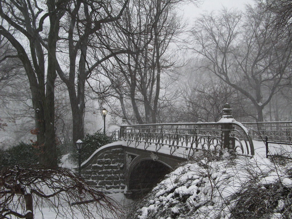 a beautiful shot of Central Park in winter - 1 of 8 picks for this week's Friday Favorites