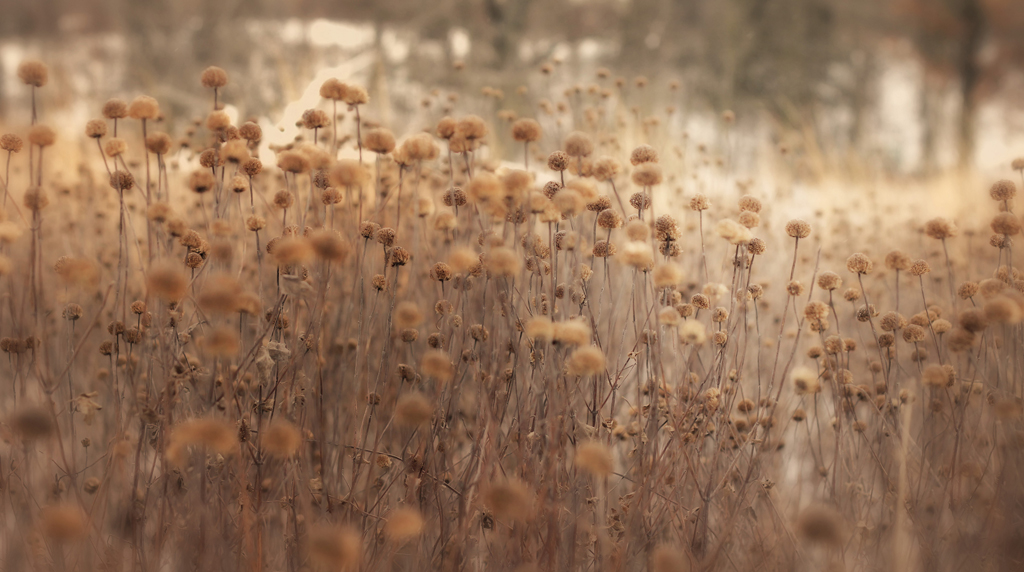 pretty weeds (for real) - 1 of 8 picks for this week's Friday Favorites