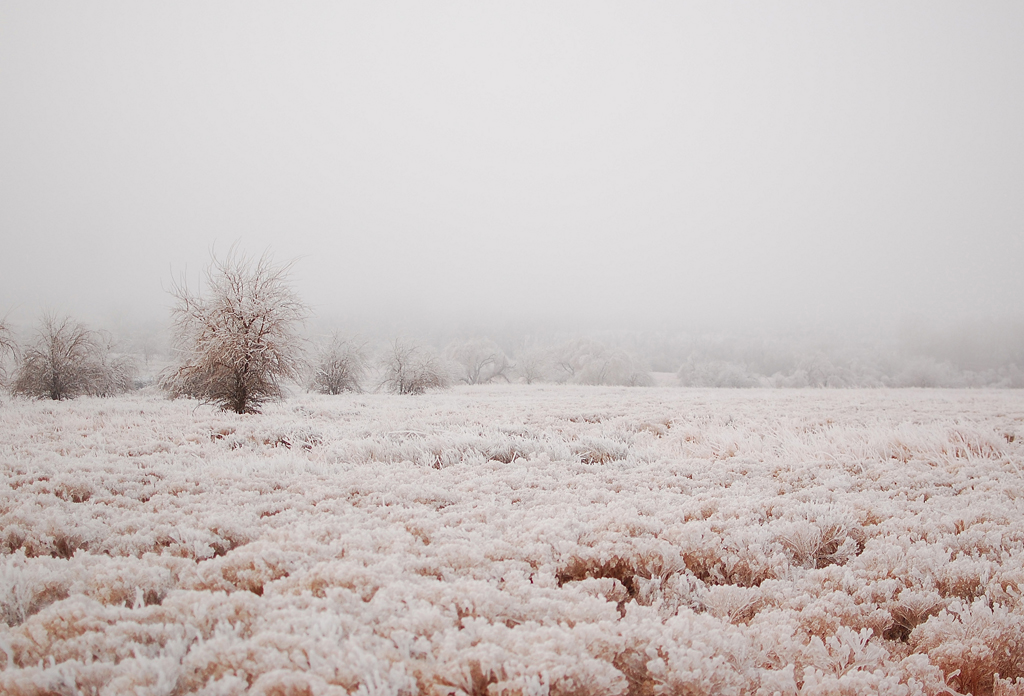 frozen Oklahoma - 1 of 8 picks for this week's Friday Favorites