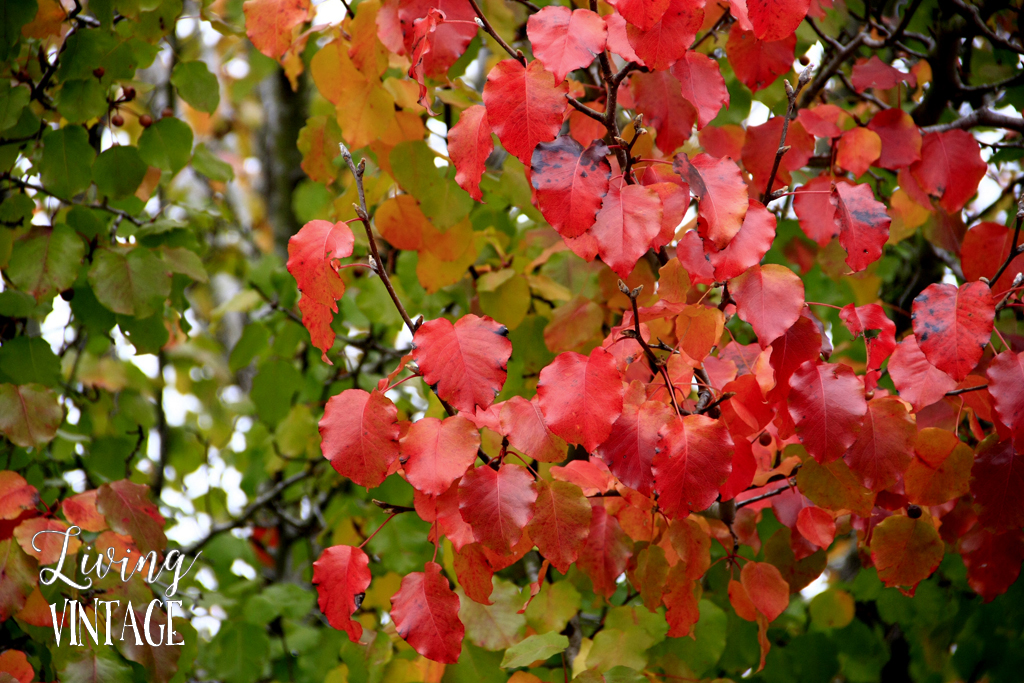 East Texas fall color
